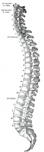 The wrong image of the spine